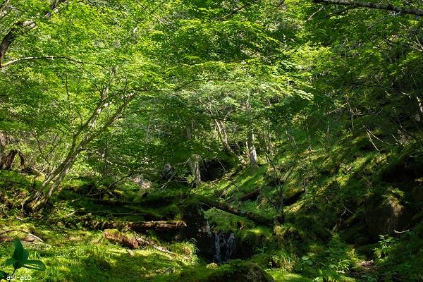 ドンドコ沢ルート 樹林帯