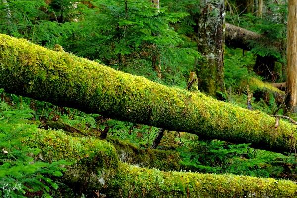 苔 樹林帯