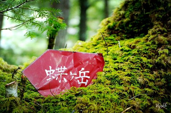 苔 蝶ヶ岳